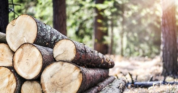 A Brief Safety Guide for Logging